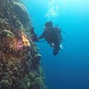 scuba diver, coral reefs, OSU researchers